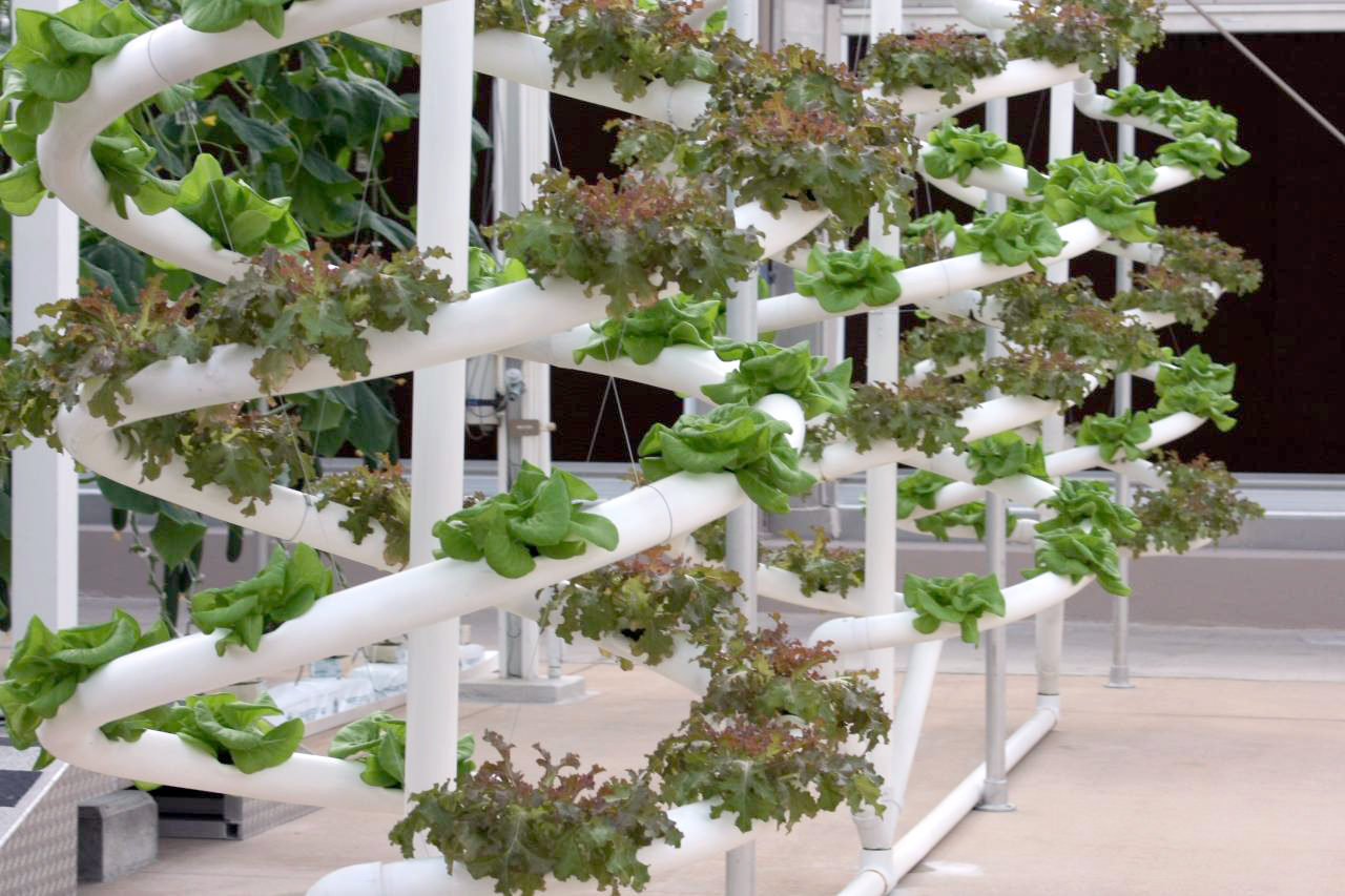 best Vertical hydroponic system