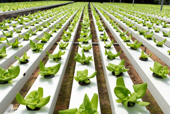 best hydroponic vegetables