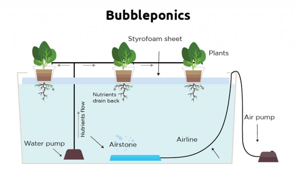 Bubbleponics System