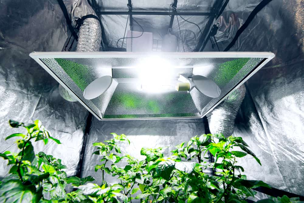 grow tents for beginners