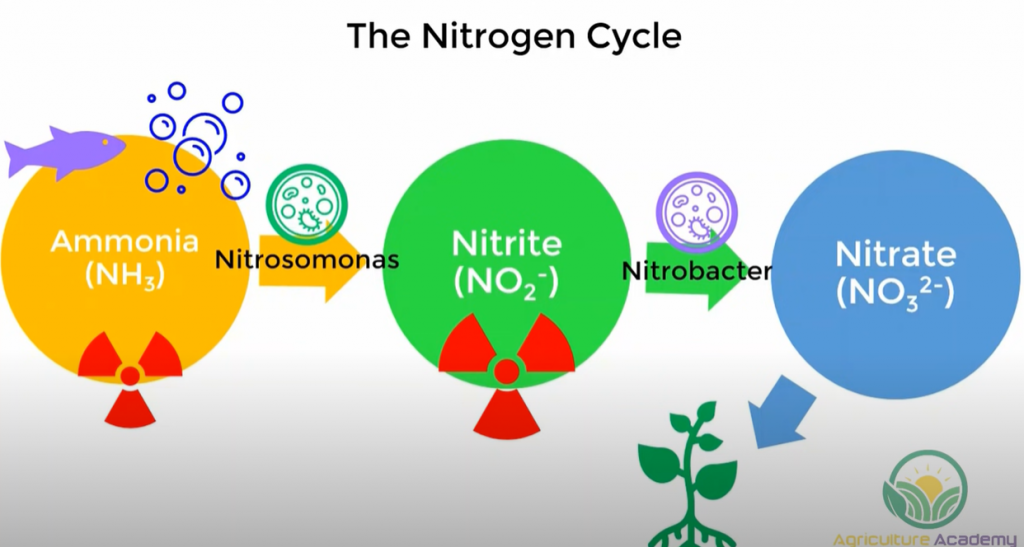 A diagram of the Nitrogen Cycle