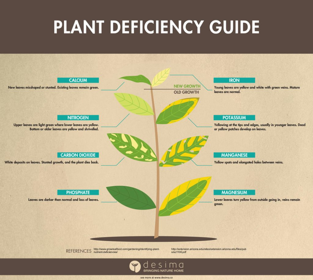 Plant deficiency guided used for DIY Hydroponic nutrients